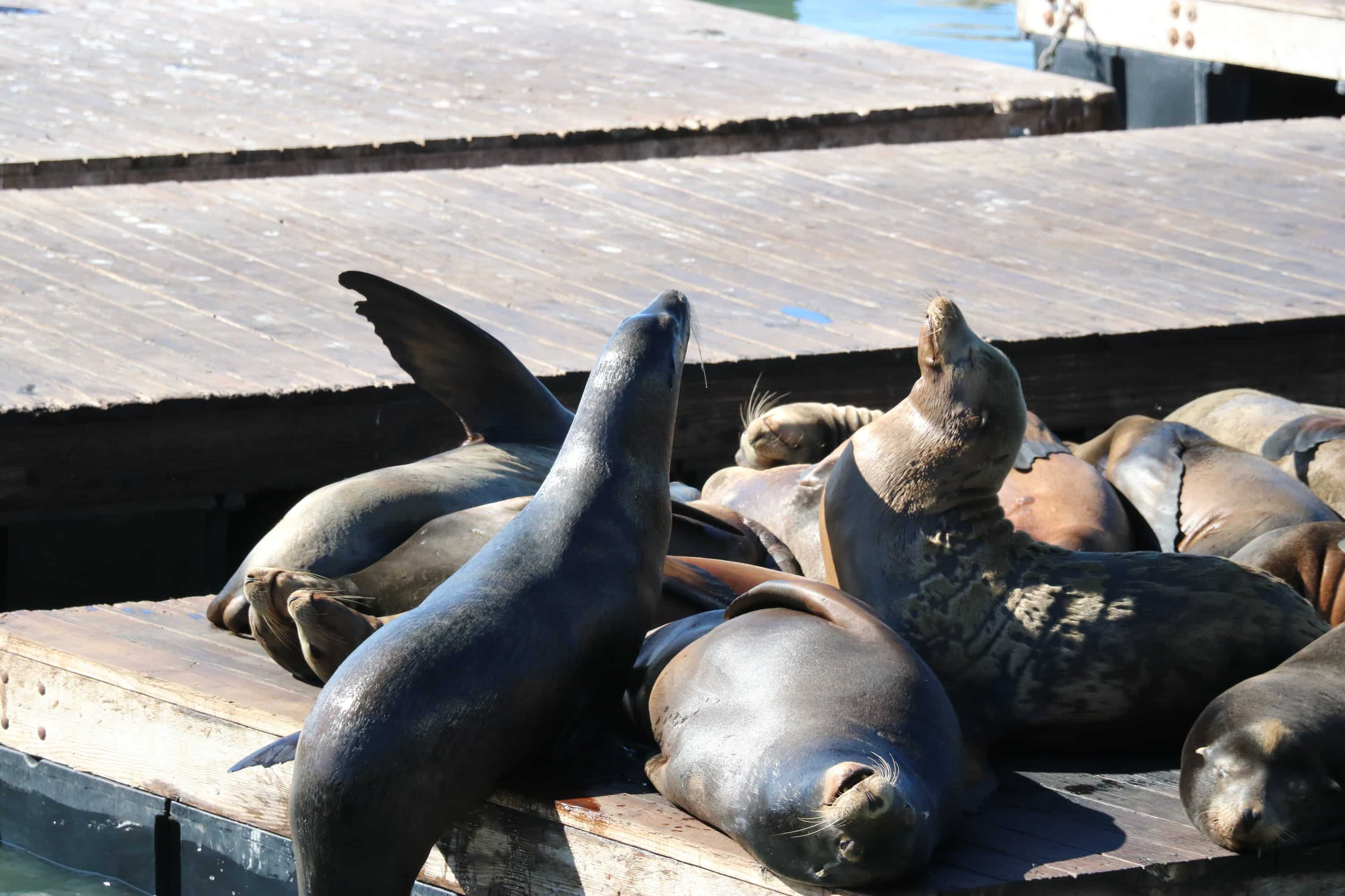 Four Things To Do In San Francisco - Seals